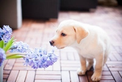 Puppy smelling a potted flower
